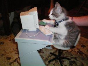 Kitten at computer